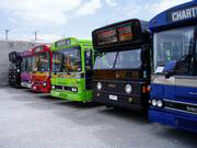 The Party Bus Coloured Buses